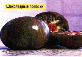 помидор Шоколадные полоски