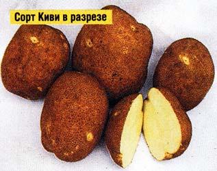 о вкусе картофеля