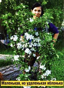 цветением яблонь