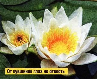 самый первый цветок