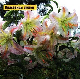 каждый цветок