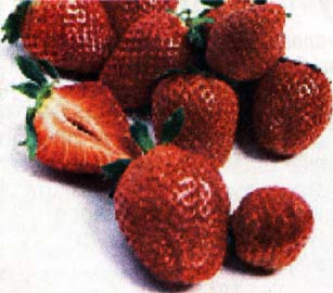 спелые ягоды клубники