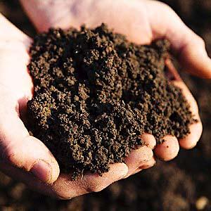 рассаде рыхлая земля