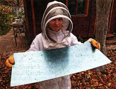 термообработку пчел