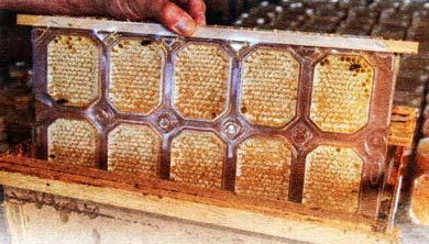 Сотовый мед в контейнерах