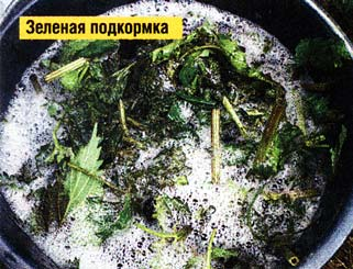 зелеными подкормками