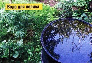 правильно поливать растения