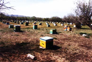 разводили пчел