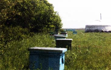 Пчеловодство Монголии