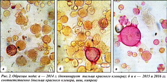анализ образцов меда