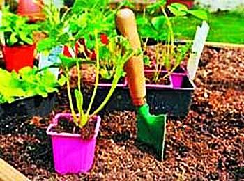 урожай садовой земляники