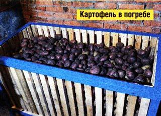 хранение картофель