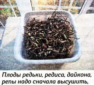 выращивании семян