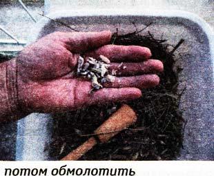Зрелые семена