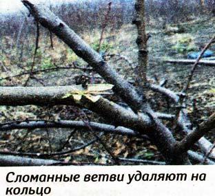 обрезки плодовых деревьев