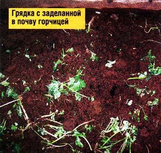 почву оздоровят
