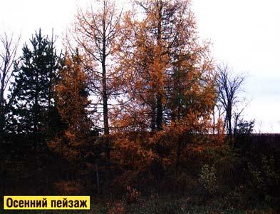 встречают осень