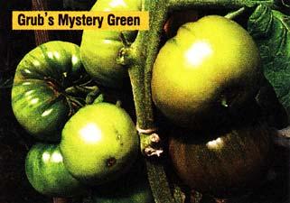 зеленоплодный сорт