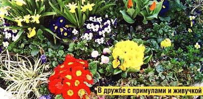 цветения двулетников