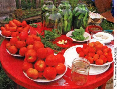Ускоряем созревание томатов