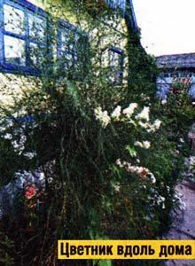 цветов на участке много