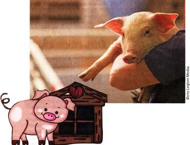 Обустроить свинарник
