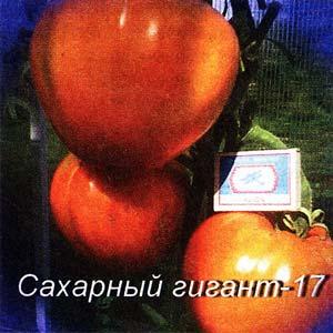 красными помидорками