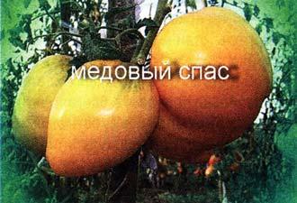 сортовых томатов